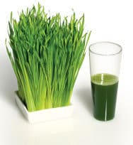 weatgrass glas