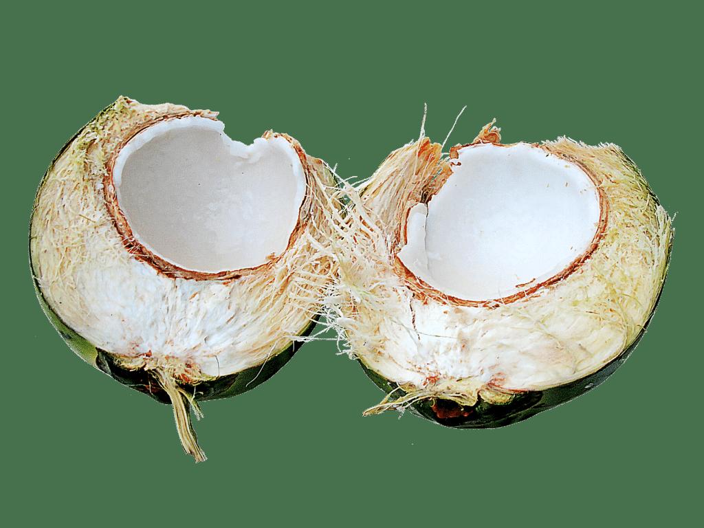 coconut-714327_1920